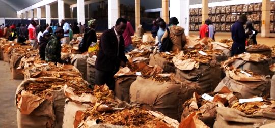 Zimbabwe Tobacco