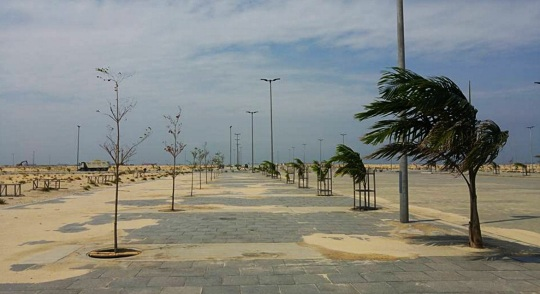 Eko Atlantic trees
